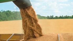 Alte 20.000 de tone de grâu din rezerva de stat urmează să fie ÎNSTRĂINATE. Guvernul a permis eliberarea