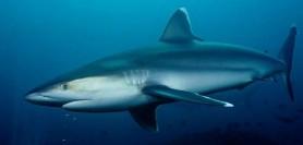 Groaznic! O femeie însărcinată și-a salvat soțul din fălcile unui rechin