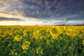 Agricultorii pot până la 5 aprilie să depună dosarele pentru a beneficia de motorină din donația oferită de România