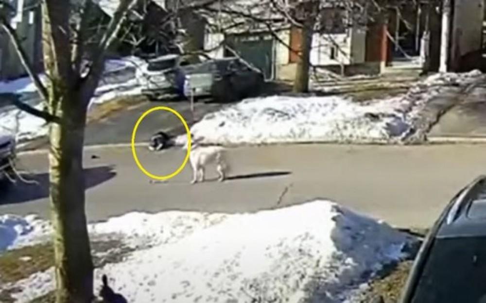 VIDEO EMOŢIONANT // Un câine i-a salvat viaţa stăpânei sale, după ce s-a prăbuşit la pământ