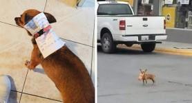 Pe timp de carantină, își trimite câinele la cumpărături