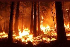 Ultima oră // Incendiu în pădurea de la Condrița. Arde tabăra Andrieș