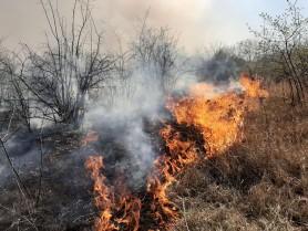 În ultimele 24 de ore, pompierii au lichidat 71 focare de vegetație uscată
